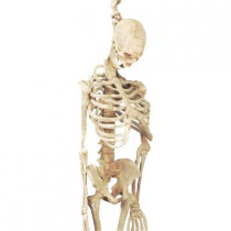 5 ft. Latex Skeleton